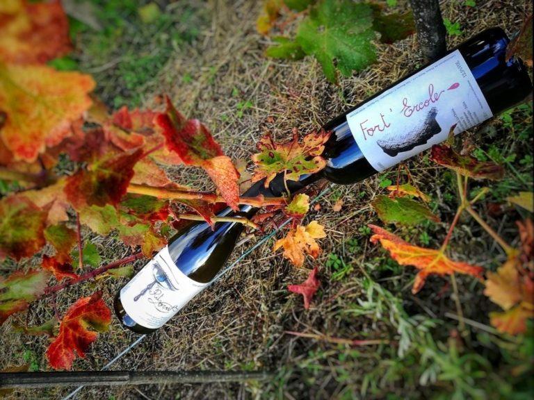 Vino rosso e bianco La Chiosa