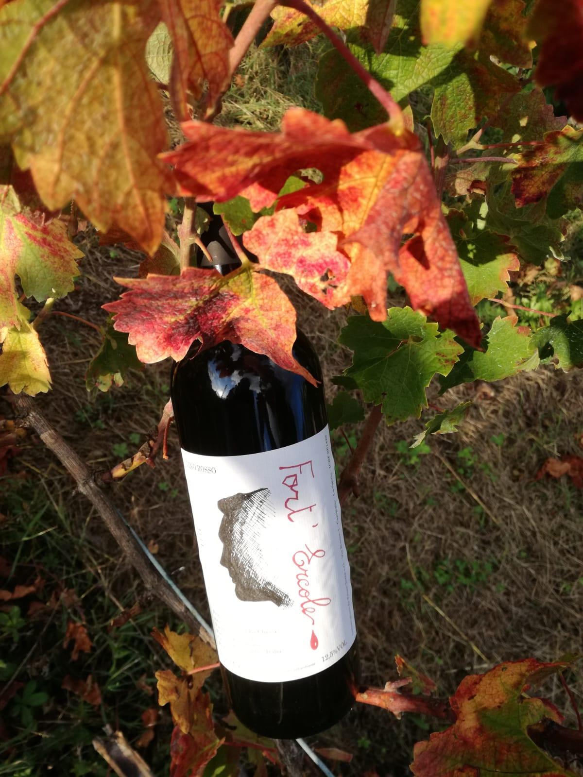 Vino rosso Fortercole La Chiosa