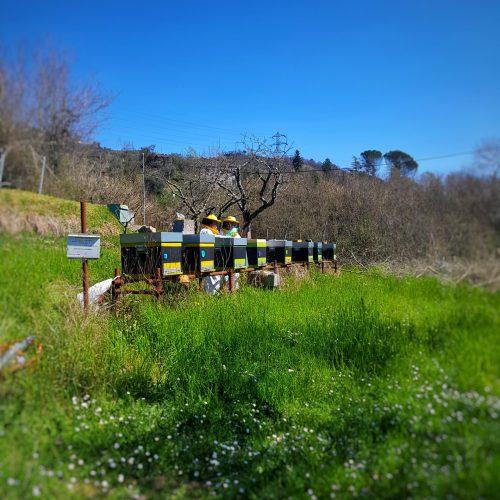 Apicoltura azienda agricola La Chiosa Calice al Cornoviglio